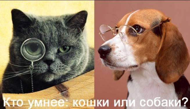 Кто умнее и почему: кошки или собаки