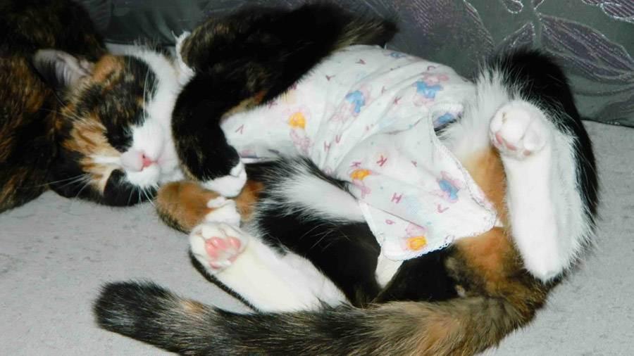 Кошка не ест и не пьет воду после стерилизации: что делать и когда начинать волноваться?