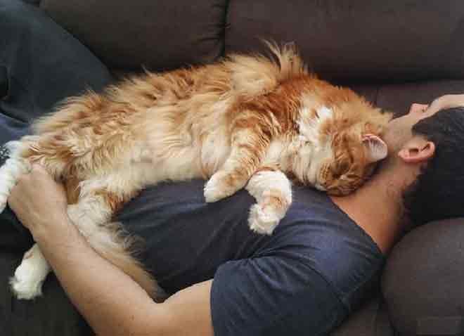 Почему кошка ложится или садится на человека, мурчит, лечит и мнет лапами?