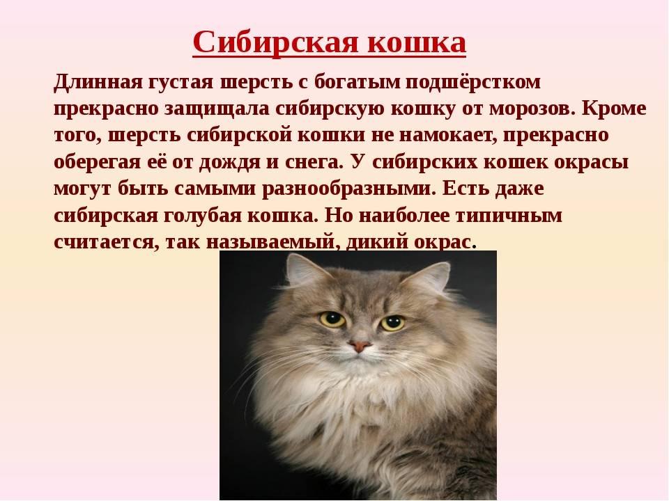 Кошки (75 фото): описание красивых домашних пород котов, выбор гамака для кошек и котят. кого выбрать: девочку или мальчика? для чего они нужны?