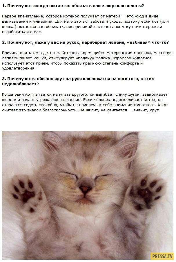 Интересные факты о кошках для детей и взрослых
