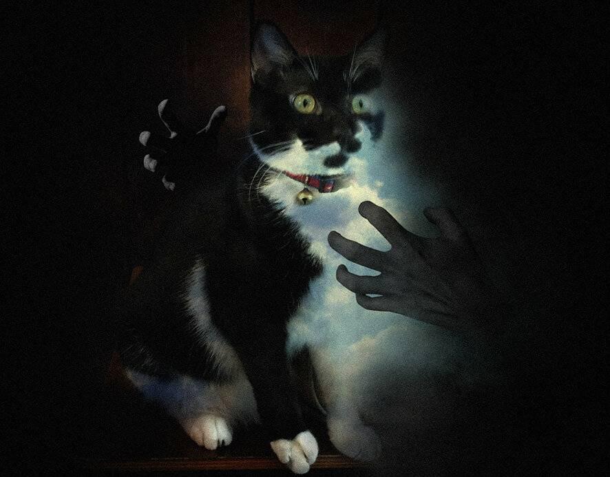 Поверья и приметы, связанные с кошками