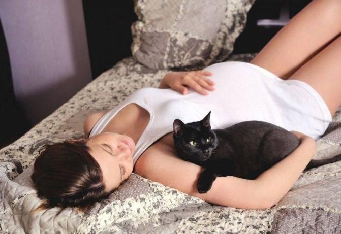 Что значит, если кошка ложится на живот беременной. почему кошка ложится на живот беременных
