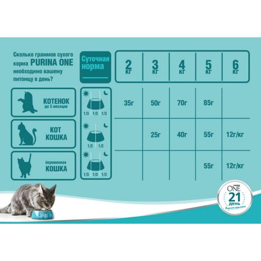 Какая норма корма для котенка в день?