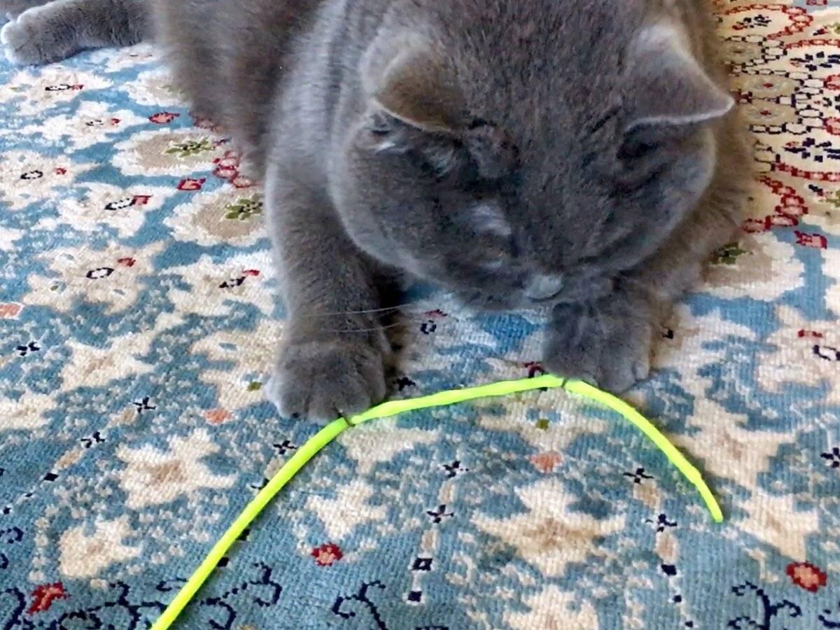 Что делать, если кот съел отравленную мышь?