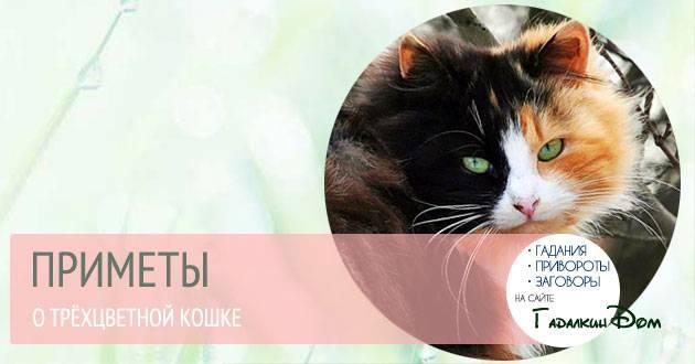 Как трехцветная кошка влияет на энерегетику дома в котором она живет - гороскоп на joinfo.com