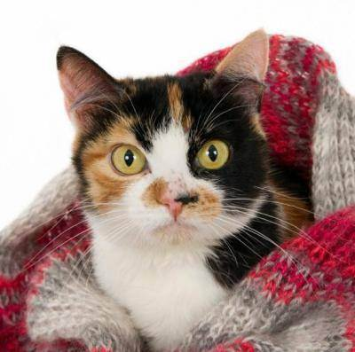 Как понять что у кота температура