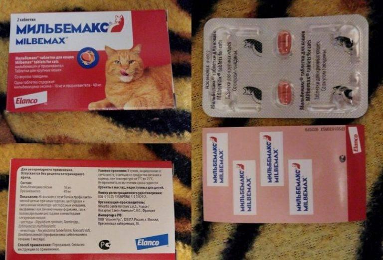 Мильбемакс для кошек: инструкция по применению таблеток от глистов