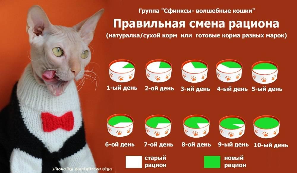 Как правильно отучить кошку от сухого корма или влажных «подушечек»