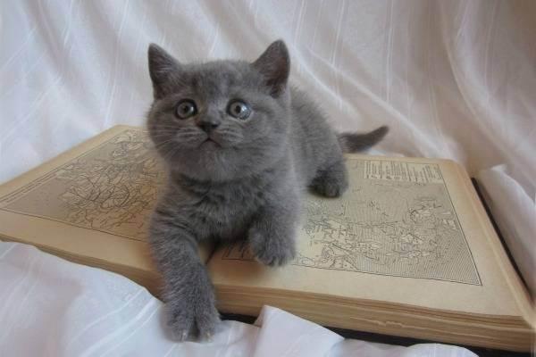 Как воспитать котенка послушным и ласковым