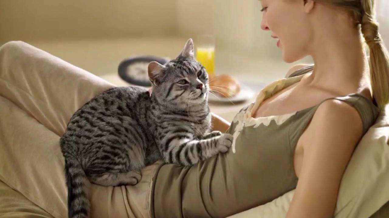 "Кошачий ""массаж"" для хозяина"