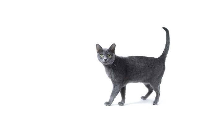 Сколько по человеческим меркам 13-летней кошке