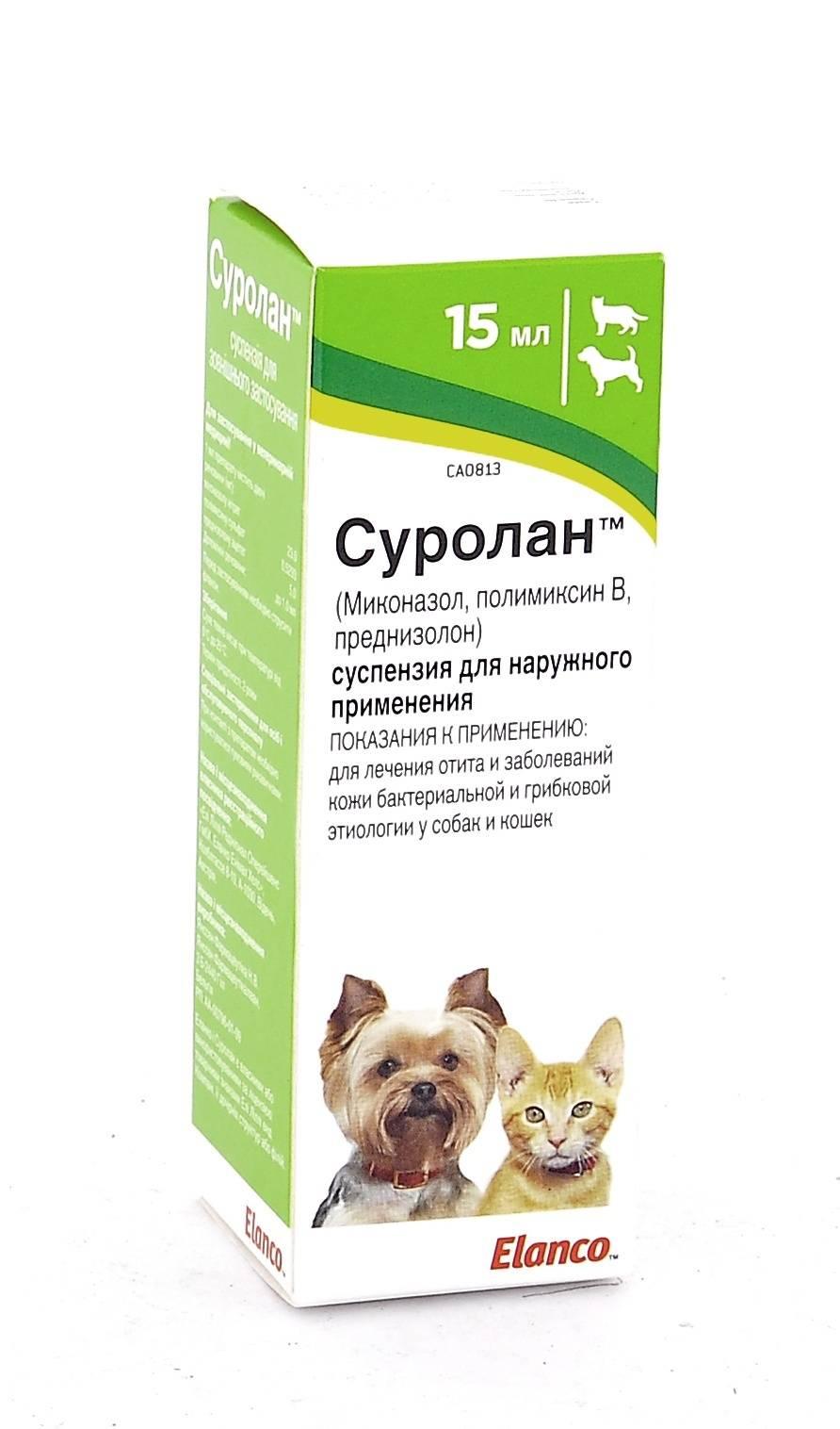 Какие капли помогают при отите у кошек? | мир кошек как выбрать эффективные капли от отита для кошки? | мир кошек