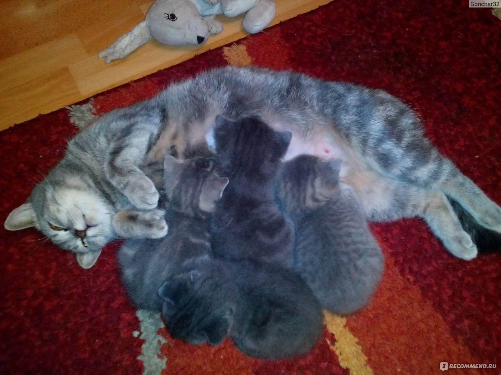 Беременность у кошек: срок, признаки и грамотный уход - kot-pes
