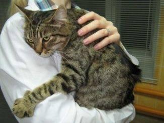 Симптоматика гастрита у кошки: эффективные способы лечения недуга