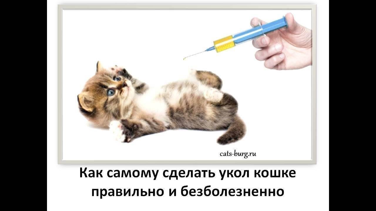 Как сделать укол коту или кошке в холку