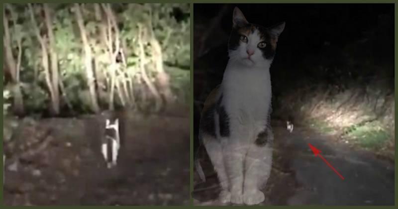 Видят ли кошки призраков