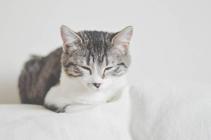 Как избавиться от запаха кошачьей мочи на диване, деревянном полу, линолеуме, ковре, обуви и в других местах квартиры