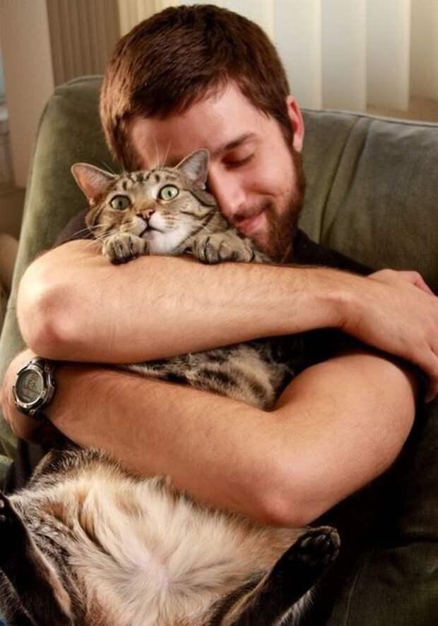 Почему нельзя обнимать котов и кошек   можно ли