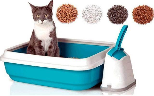 Наполнители для кошачьего лотка: виды и отличия