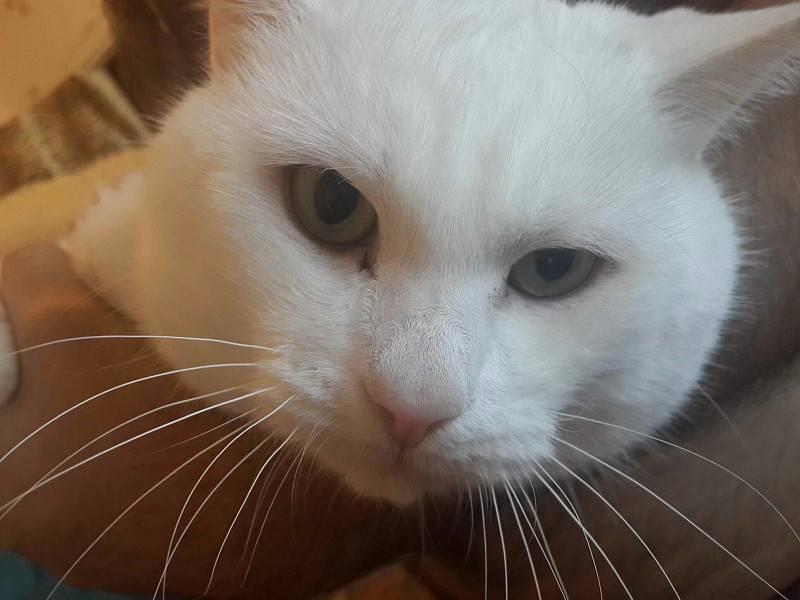 Темные выделения из глаз у кошки: причины, возможные заболевания, тревожные симптомы, лечение