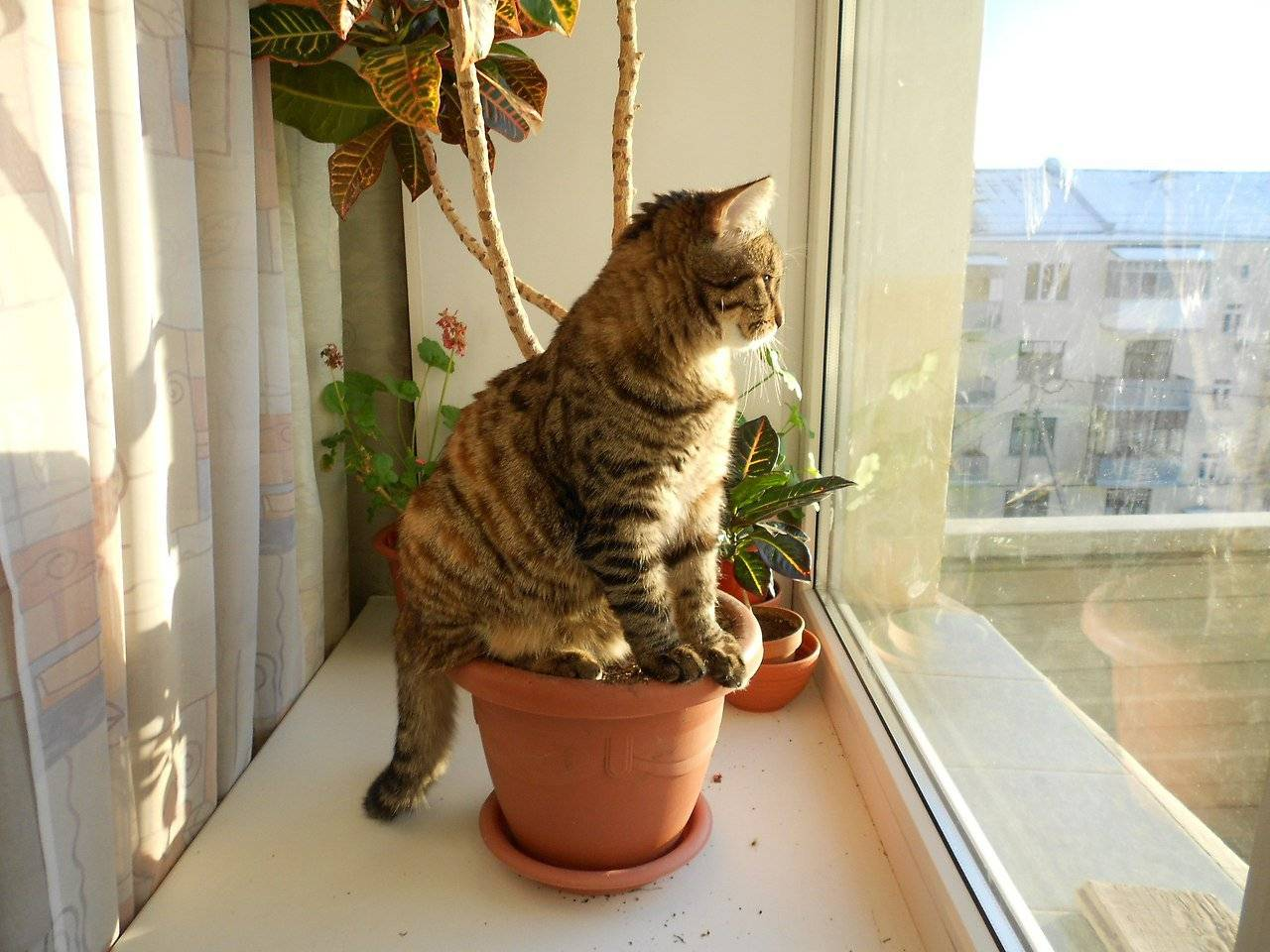 4 причины почему кошка ест землю и чем это опасно 4 причины почему кошка ест землю и чем это опасно