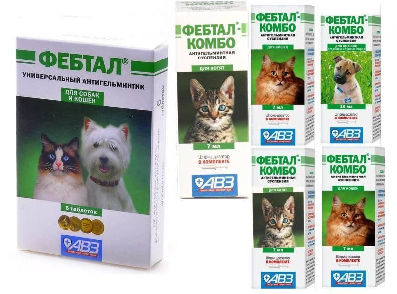 Фебтал комбо (суспензия) для кошек и котят, собак и щенков | отзывы о применении препаратов для животных от ветеринаров и заводчиков