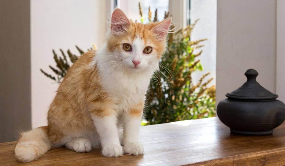 Как узнать возраст кошки или котенка