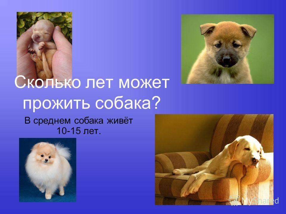 Сколько живут собаки: факторы, влияющие на продолжительность, советы владельцам