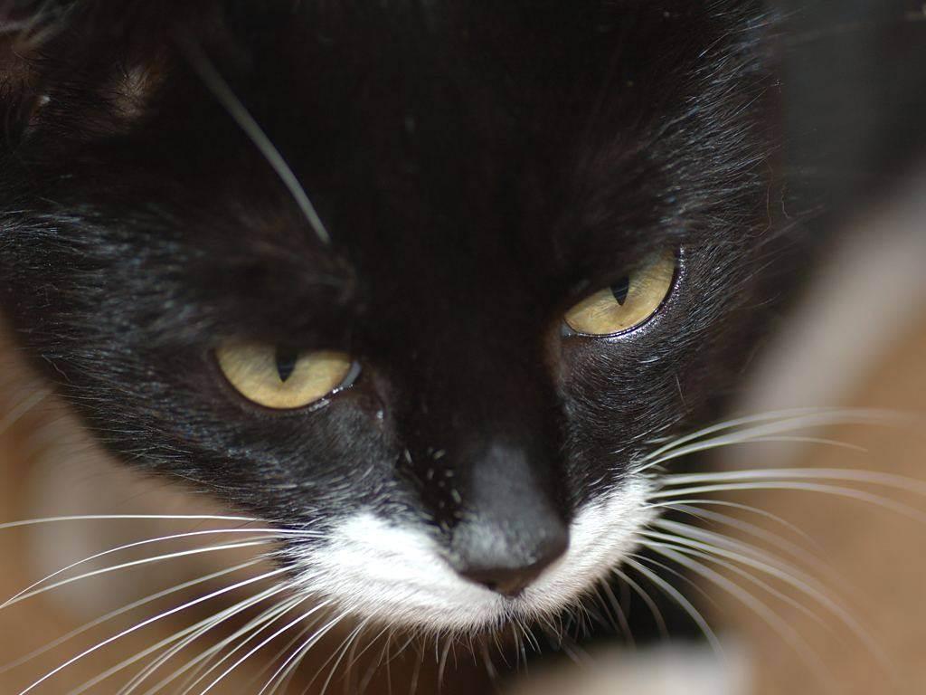 Что будет если коту обрезать усы: отрастут ли они заново