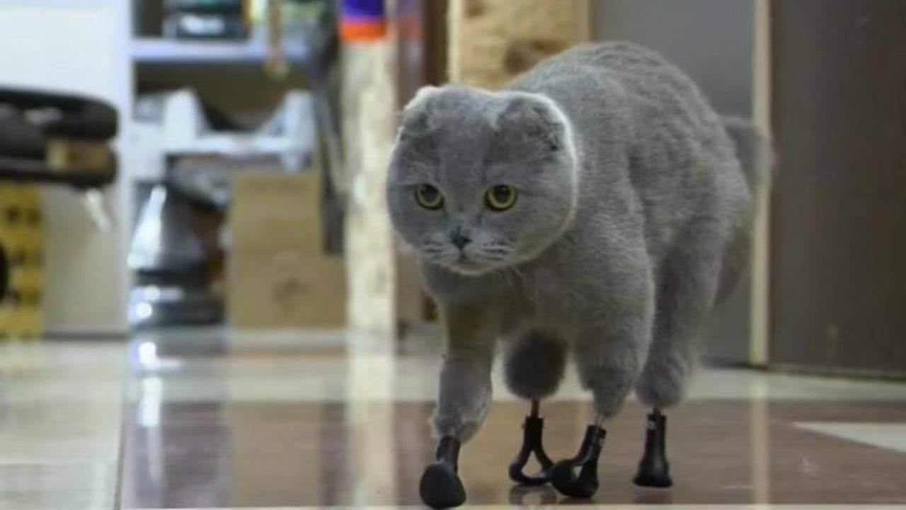 Аллергия на кошек революционный взгляд