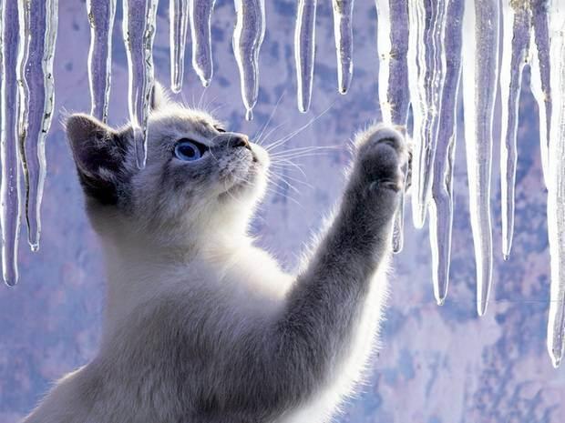 Наказать кошку что. скука и апатия. как наказать котёнка, чтобы он понял