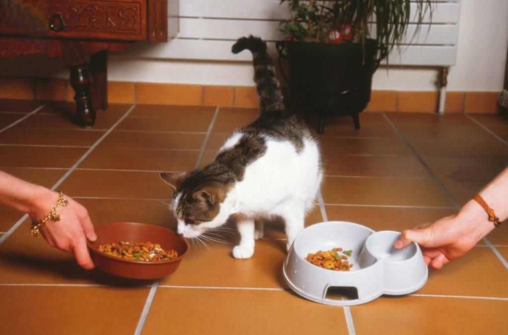 Почему кошка закапывает еду?