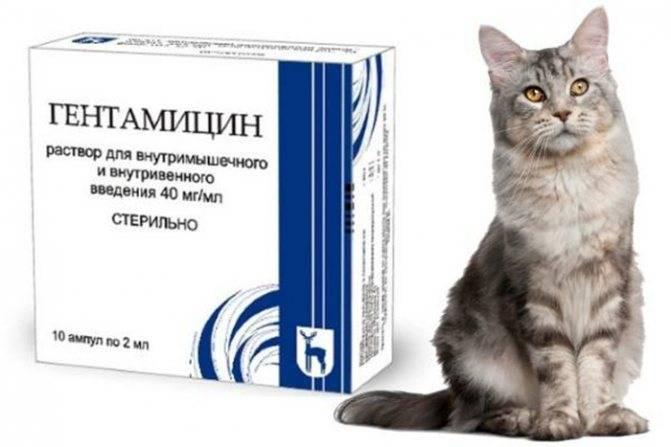 Как давать Гентамицин кошке?