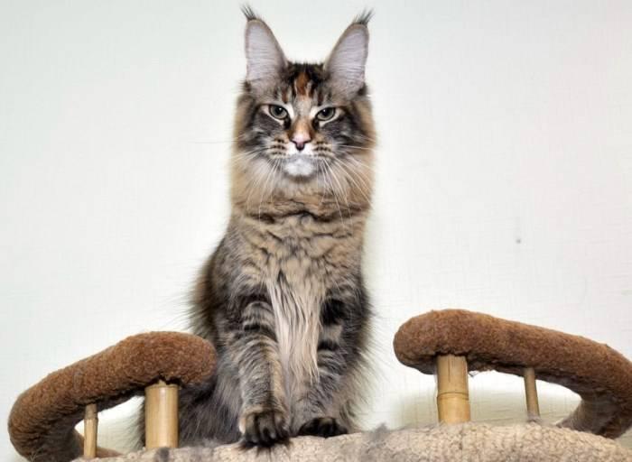 Смена зубов у кошки: что нужно знать владельцу