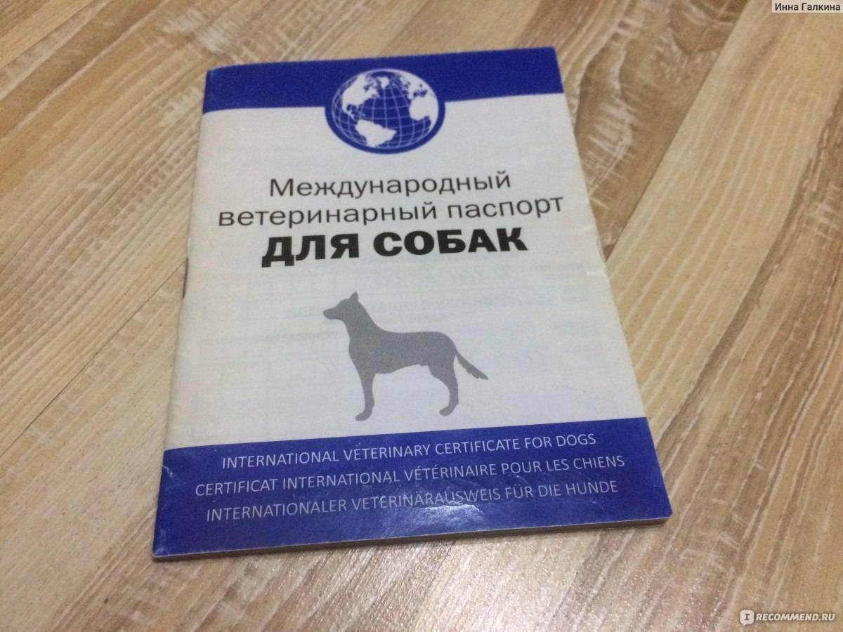 Образец заполнения паспорта кошки. как сделать и заполнить паспорт кошке, взрослой и беспородной, из личного опыта - в клинике