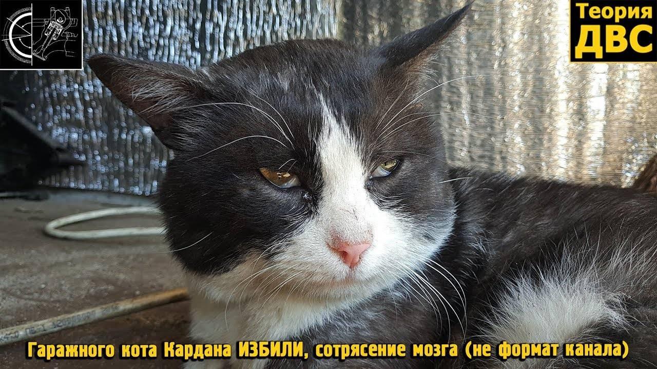 Симптомы сотрясения мозга у кошек и что при этом делать. как и чем лечить сотрясение мозга у кошек кота ударили по голове что делать - новая медицина