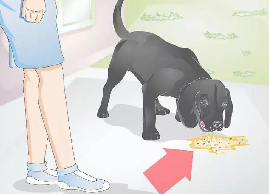 Понос и рвота у кота: что делать в домашних условиях
