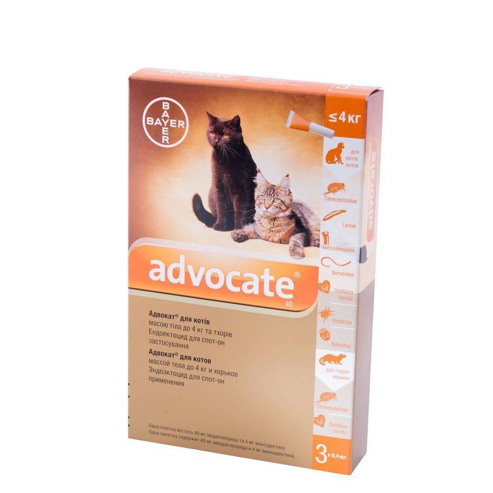 На защите ваших кошек! адвокат: капли для кошек от блох и клещей