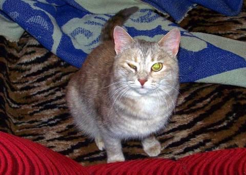 Кот щурит один глаз – 5 возможных причин состояния