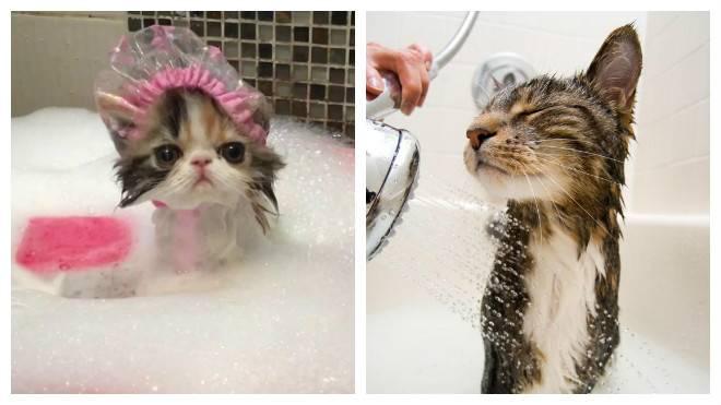 Можно ли мыть кошку обычным шампунем для людей: особенности применения при купании