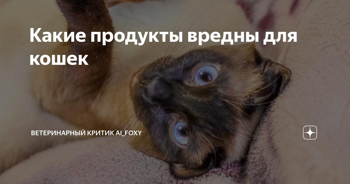 Почему кота нельзя кормить со стола? советы и запрещенные продукты