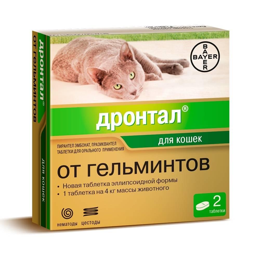 Действующие лекарства от глистов для кошек