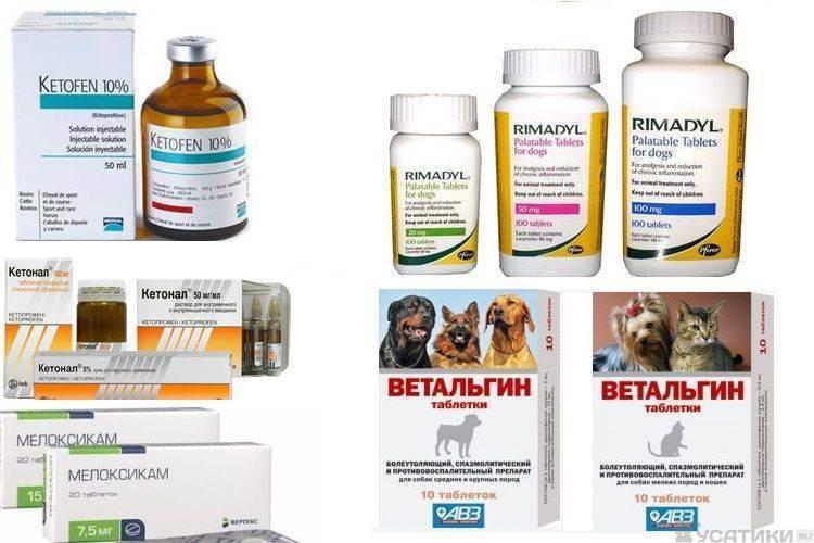 Обезболивающие препараты для кошек и котов | в домашних условиях, после операции