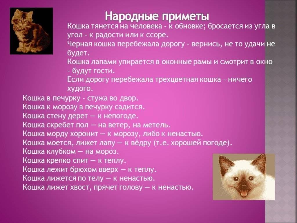 Заговоры, чтобы кот вернулся домой