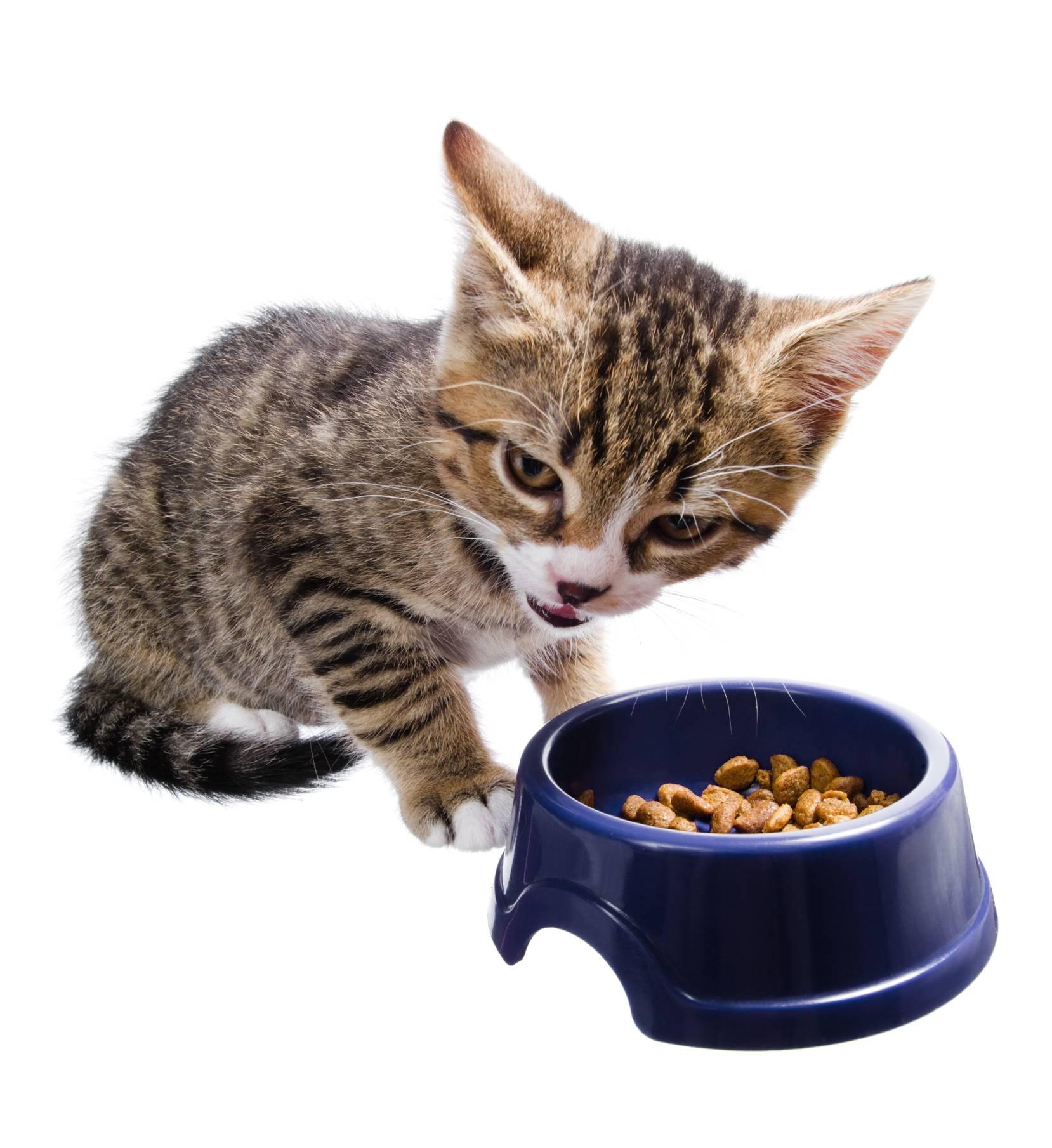 Как приучить взрослую кошку к сухому корму: после натурального питания или пакетиков