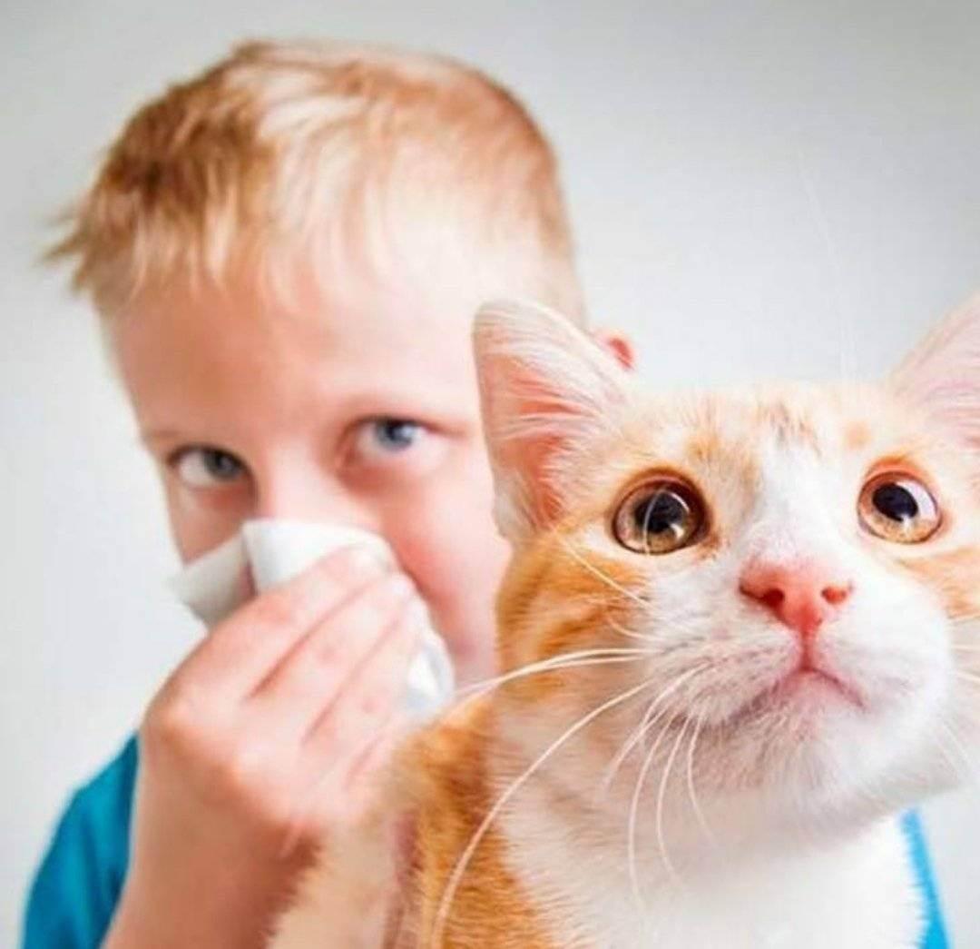 Как проявляется аллергия на кошек: фото, причины и этиология заболевания