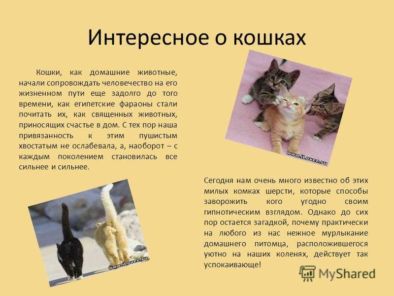 Почему говорят что у кошек 9 жизней?