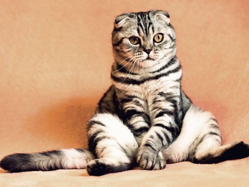 Как наказывать кошку правильно