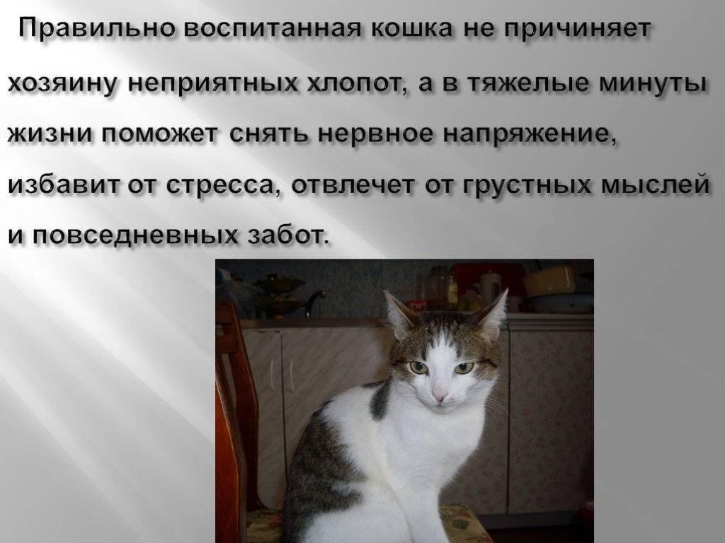 Можно ли бить кота — почему нельзя? как правильно наказать кошку: можно ли бить животное в целях воспитания